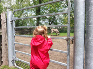 Peering at a donkey inside Centreville Amusement Park.